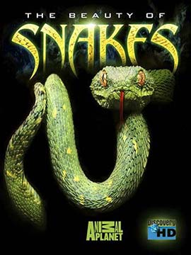 The Beauty of Snakes